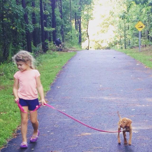 first walk with vizsla puppy