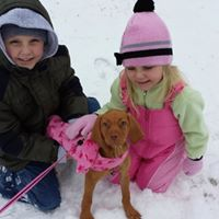 Vizsla puppy with kids